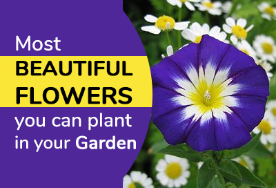 15 Types Of Flowers You Should Have In Your Garden